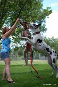 Dog Training with Natalie