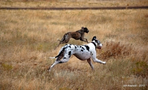 Dogs love to run! Let them run in safe, controlled settings with a solid recall command so that they always come back!!!